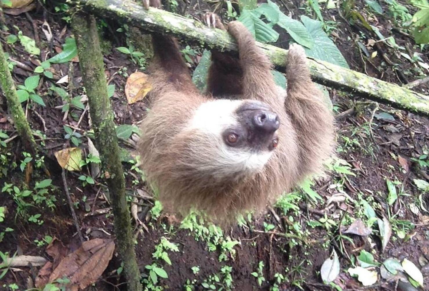 amazon wildlife rescue  care for animals in ecuador